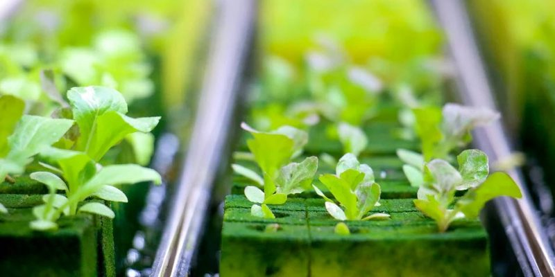How to Build a Cheap Hydroponic System