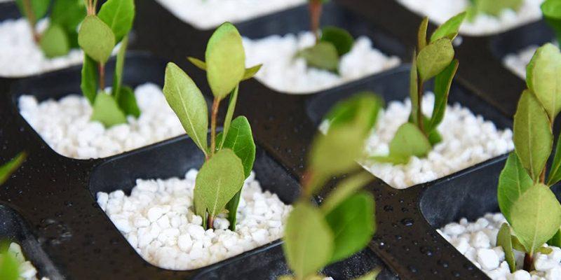 Hydroponics Growing Medium