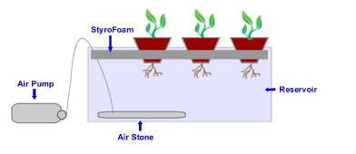 Water Culture Hydroponics System – How to Build It