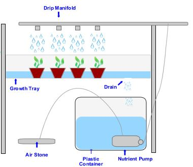 Drip Hydroponics System – How to Build It