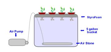 How to Build a Hydroponics Water Culture System Using a 5 Gallon Bucket